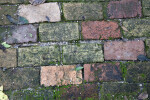 Old Worn Bricks at the Kanapaha Botanical Gardens