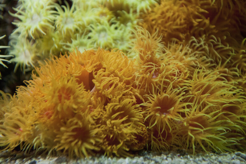 Orange Invertebrates Living in Water