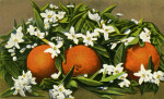 Oranges and Blossoms (painted)