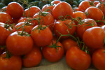 "Organic ""On the Vine"" Vine Ripe Tomatoes"