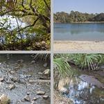 Oscar Scherer State Park photographs