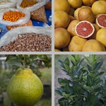 Other Citrus photographs