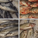 Other Fish photographs