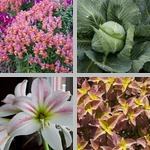 Other Herbaceous Plants photographs