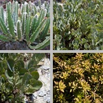 Other Succulent Plants photographs
