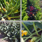Other Vegetable Crops photographs