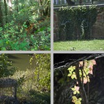 Other Vines photographs