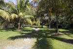 Palm Trees Casting Shadows