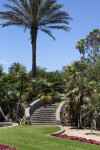Palm Trees Near Curved Steps