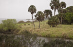 Palm Trees, Shrubs, and Grass at Myakka River State Park