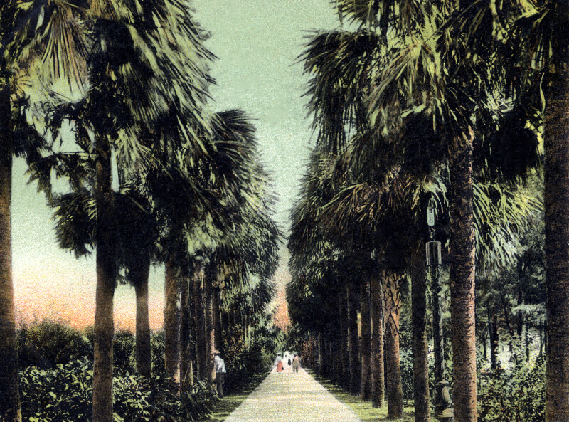 Palm Walk in Palm Beach, Florida