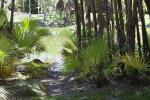 Palmettos Near a Pond