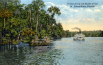 Palms along the Banks of the St. Johns River
