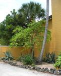 Palms and Aloe Plants