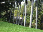 Palms and Bridge