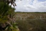 Palms and Everglades
