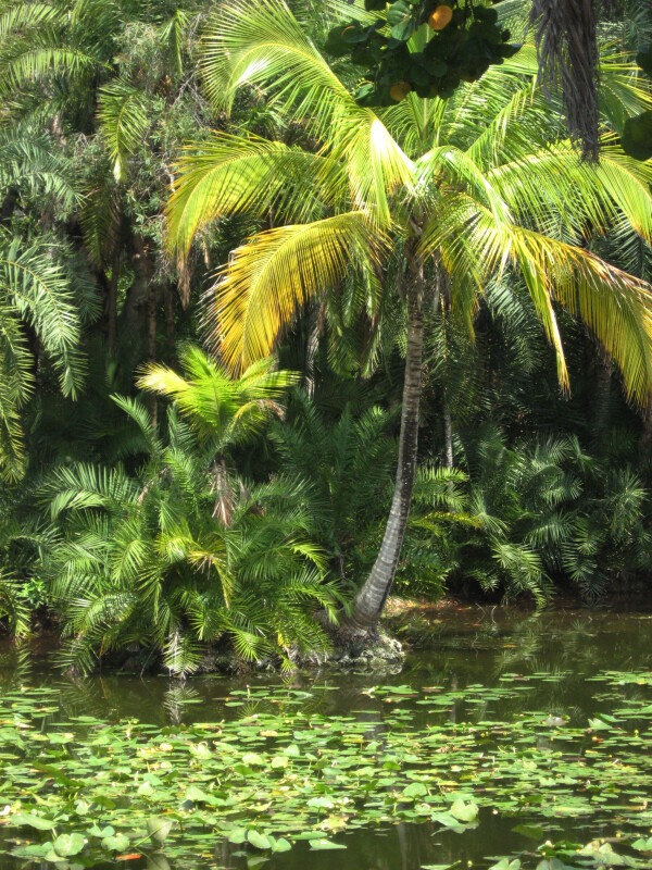 Palms and Lilies