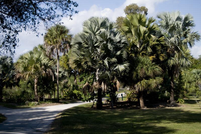 Palms and Palmettos