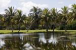 Palms on Shore
