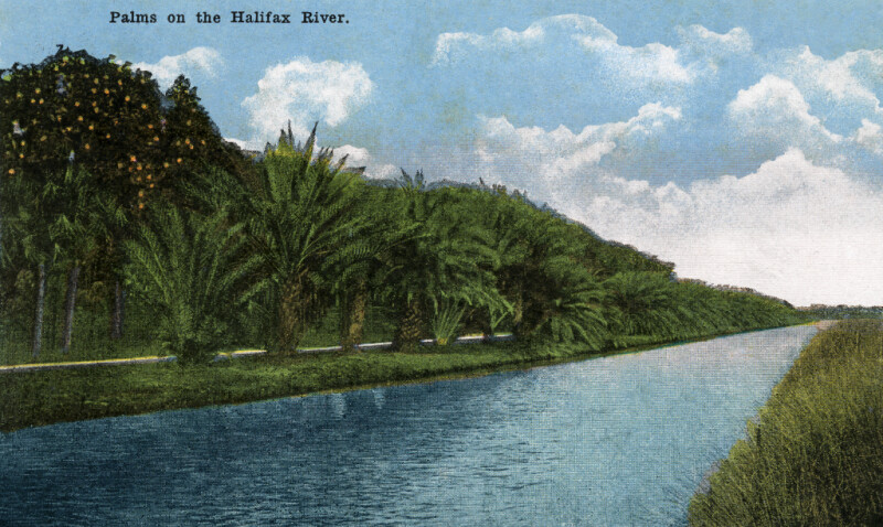 Palms on the Halifax River