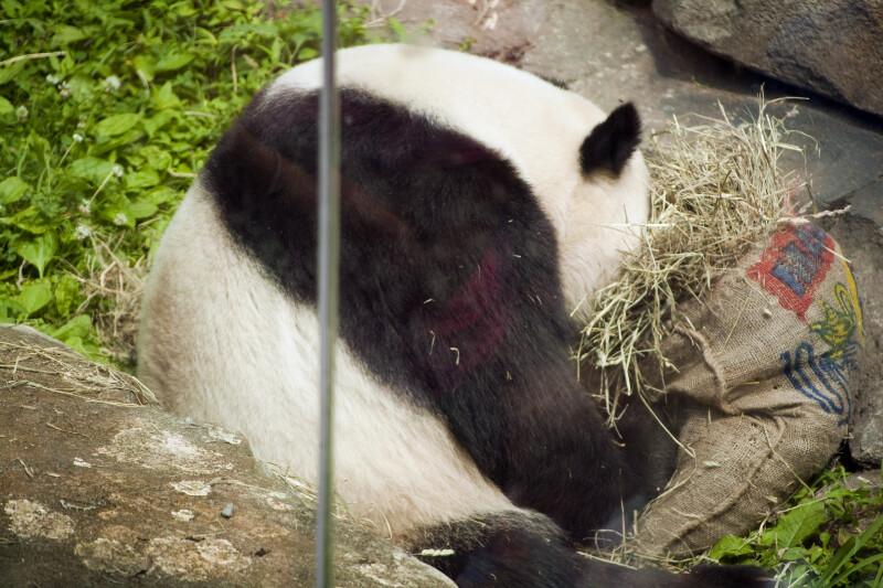 Panda and Sack