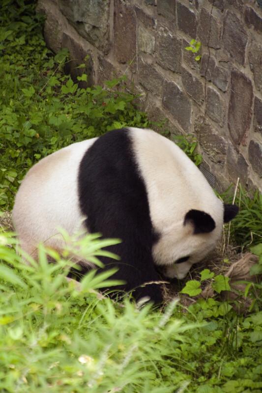 Panda Searching