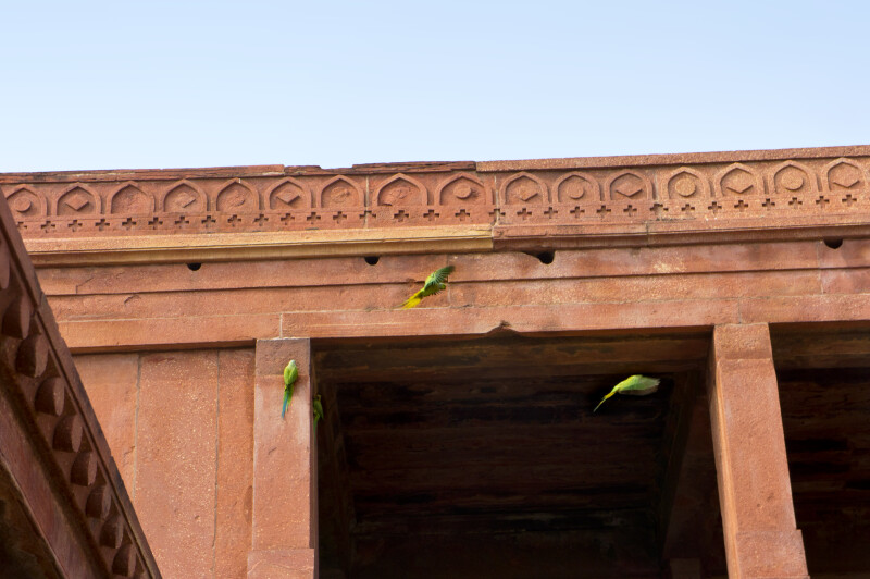 Parrots Fly by the Harem Sara