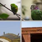 Parrots photographs