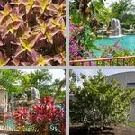 Parts of Plants photographs