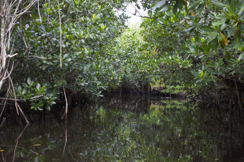 Passage Through Halfway Creek in Everglades National Park that Runs Between Mangroves