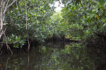 Passage Through Halfway Creek in Everglades National Park that Runs Between Mangroves