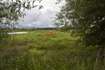 Pasture Restored to Wetland