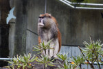 Patas Monkey Lookout