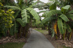 Path at Fruit and Spice Park