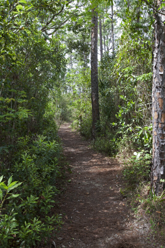 Path at Long Pine Key of Everglades National Park