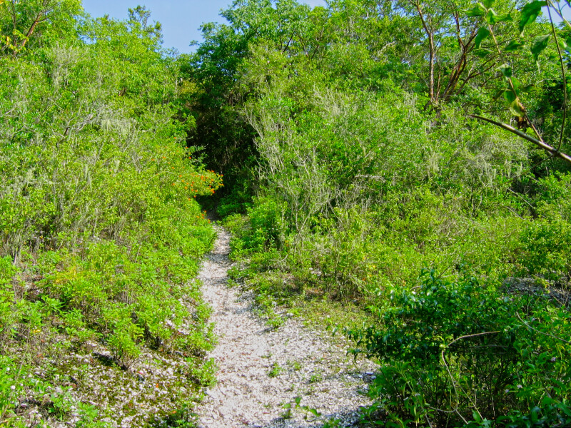 Path at Mound Key