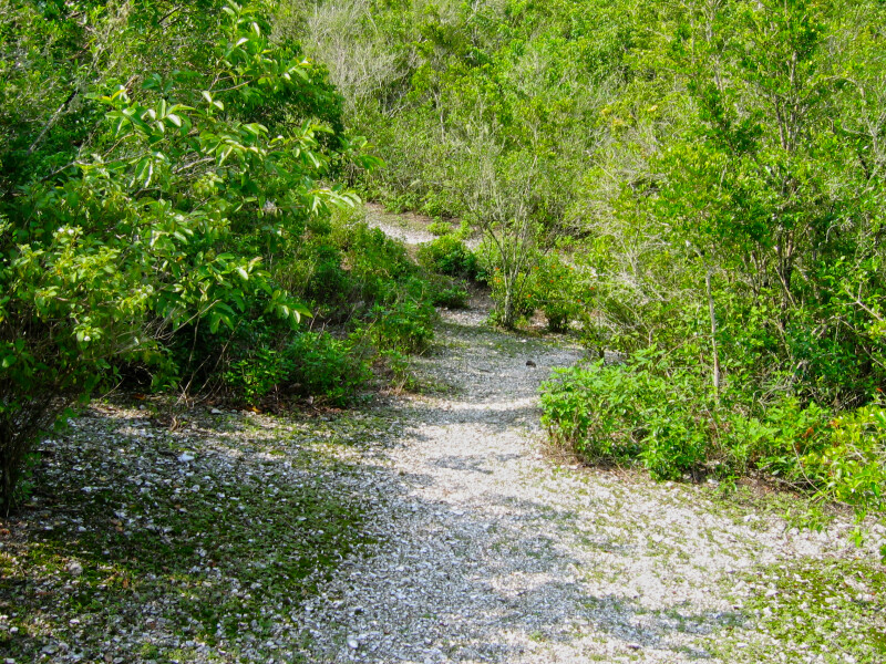 Path at Mound Key State Park