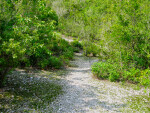 Path at Mound Key State Park