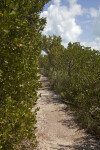 Path Leading Through Shrubs and Small Trees at Biscayne National Park