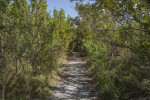 Path Leading Through Tall Shrubs