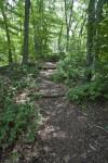 Path Running Through Trees