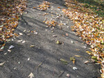 Pathway with Fallen Autumn Leaves