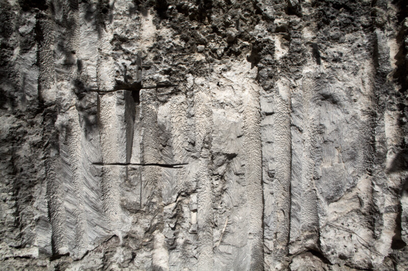 Patterned Wall of Coral Fossils and Sediments