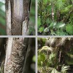 Paurotis Palms photographs