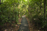 Paved Section of the Gumbo Limbo Trail
