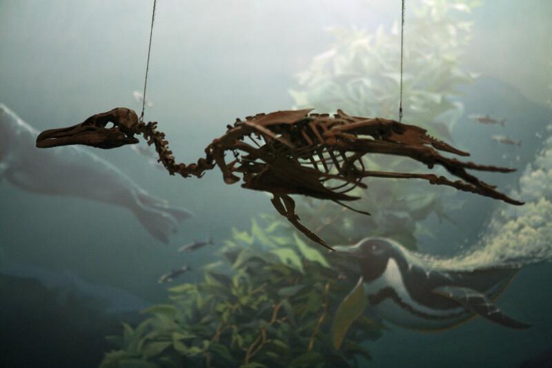 Penguin Skeleton