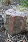 Petrified Tree Side View