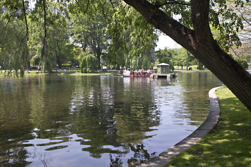 Photo Taken From Edge of the Lake at the Boston Public Garden