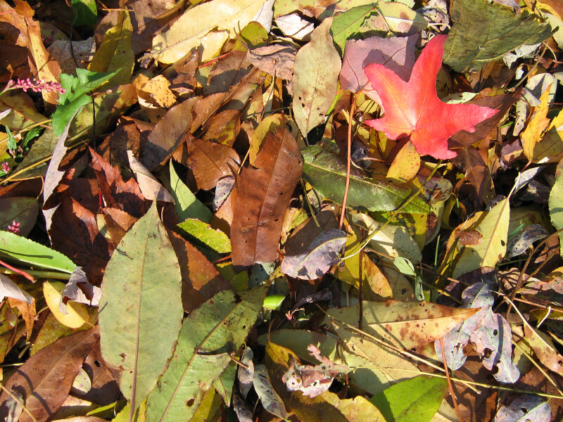 Pile of Green and Red Autumn Leaves