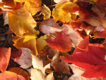 Pile of Yellow and Red Leaves